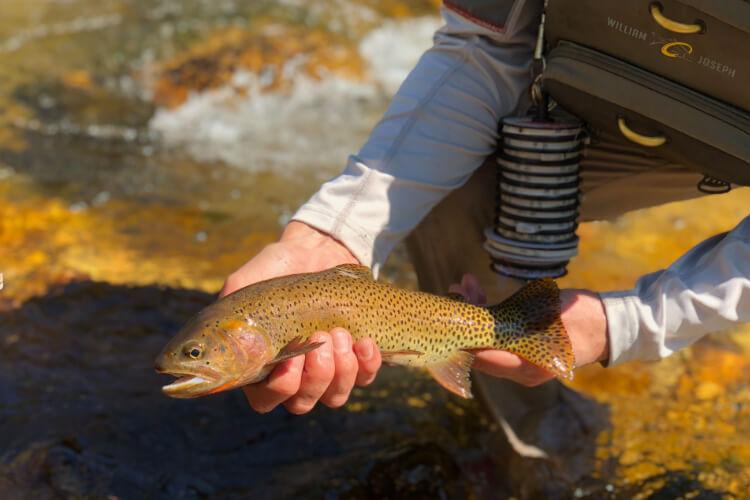 Salt Lake City Fishing